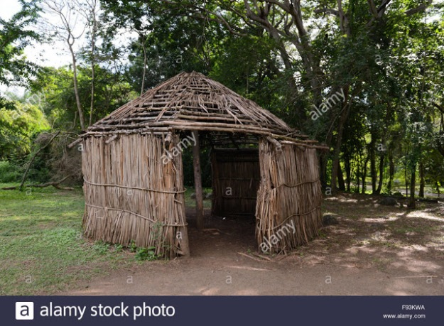 replica-of-a-indigenous-hut-at-the-tibes-indigenous-ceremonial-center-f93kwa